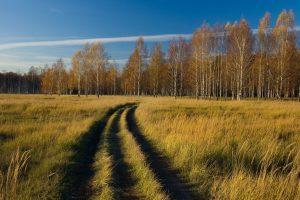 Как начисляется и как оплатить налог на землю юридическим лицам